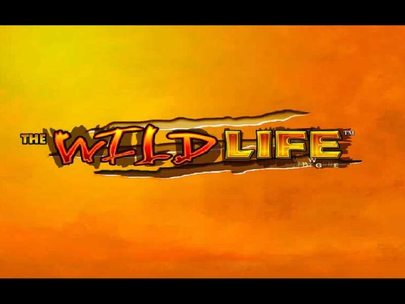 Play The Wild Life Slot